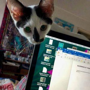 Cat peeking over computer